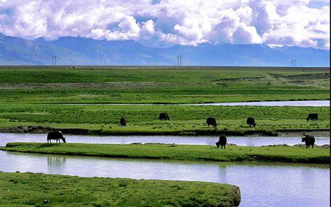 """西藏""""一江两河流域农业面源污染调查与防控技术研究""""项目取得进展"""