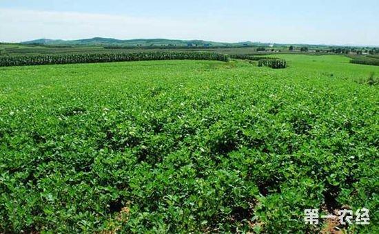 有机农产品需求增加进一步刺激生物农药的生产和发展