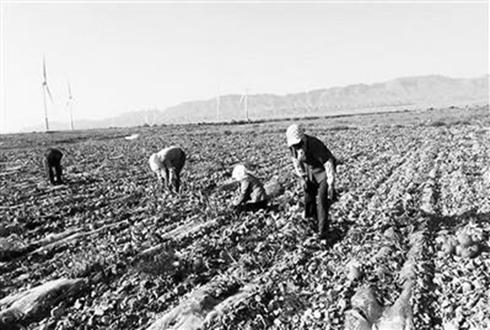 翟政娇:春夏种植秋冬养殖 带领农户走上脱贫致富路