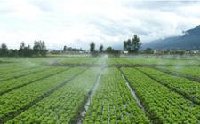 <b>以色列签署协议到非洲传播农业技术</b>