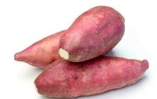 红薯茎线虫病防治技术