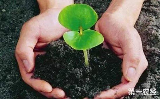 湖北:加快推进农村供给侧改革 实施果菜茶有机肥替代化肥行动