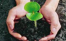 <b>湖北:加快推进农村供给侧改革 实施果菜茶有机肥替代化肥行动</b>