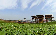 天津:落实乡村振兴战略 启动休闲农业和乡村旅游发展规划