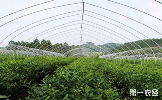 我国认证的有机产品企业1009家 有机农业示范基地面积已超2000万亩