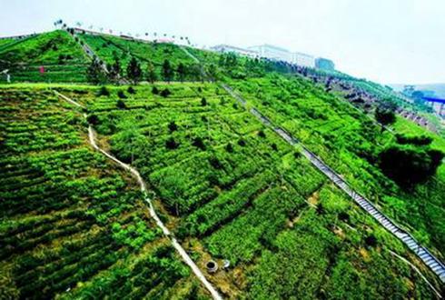 商洛丹凤:林下产业成贫困户生态脱贫保障