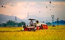 智能、自动化农业正改变传统农业模式