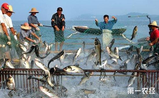农业部于康震:力争到2020年渔业现代化建设取得明显成效