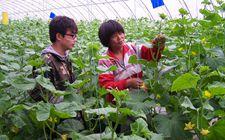 """湖南:农民成""""香饽饽"""" 55万人争当""""新农民"""""""