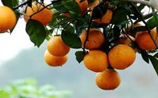 泸州叙永:要致富先修路 多元产业促农增收致富