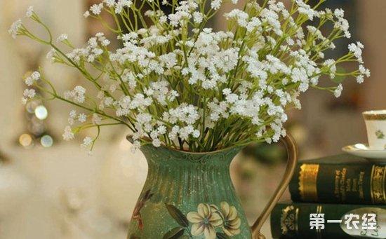 8种适合养在室内的盆栽花卉介绍!花朵小巧精致花色丰富
