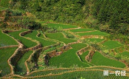 海南启动全省首次农用地土壤污染物状况详查工作