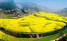 """湖北武汉:""""三乡工程"""" 为271个贫困村农民增收2.25亿元"""