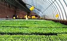 <b>联合国粮农组织:知识成为粮食和农业未来新范式</b>