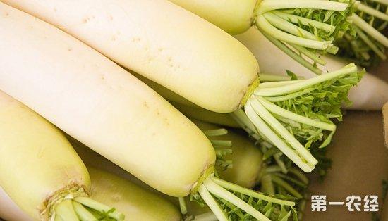 苏州南环桥市场:萝卜热销 山药价格平稳