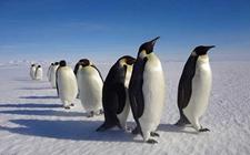 <b>企鹅是怎样繁殖的?企鹅的繁殖方式介绍</b>