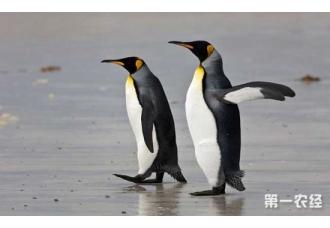 <b>企鹅有哪些天敌?企鹅的天敌是什么动物?</b>