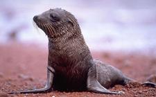 <b>海狮是什么动物?海狮的形态特征是怎样的?</b>