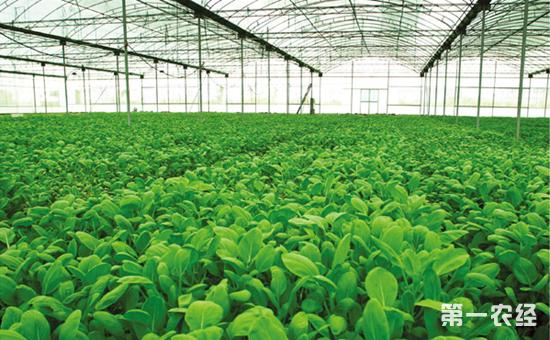 柯炳生谈农业:农业农村进入新时代会有哪些重大变化?