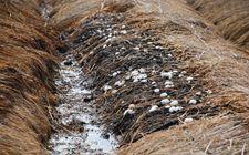 贵州省将养殖场粪污处理情况纳入地方政绩考核