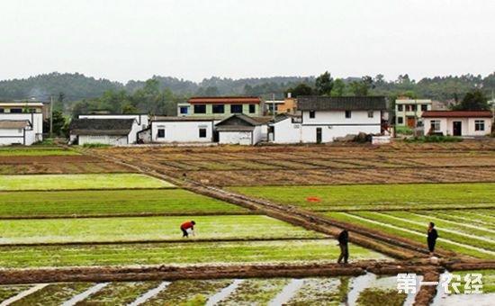 农业部:明年将积极探索确权成果在推进土地流转等方面的转化应用