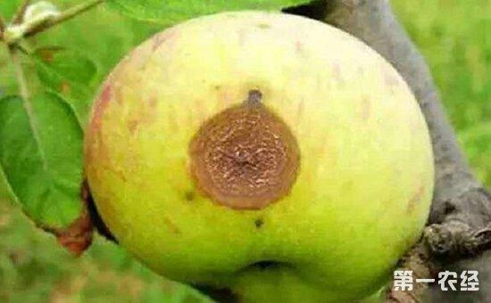 苹果常见病害防治方法