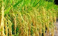 推动信息化与农业现代化深度融合 引领和驱动农业现代化发展