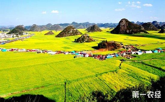 农业农村发展增添新动能  呈现多元化推进格局