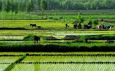 """四川都江堰:集聚优质农业资源 """"大青城""""引领产业升级"""