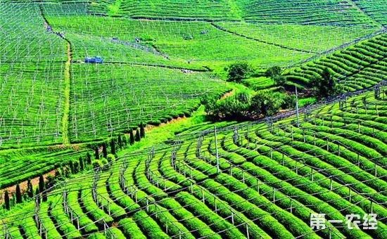 我国农业迎来发展新时期  功能农产品产业前景广阔