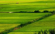 """<b>山东:打造农业""""新六产""""发展格局 四种业态成为主要发展方向</b>"""