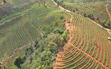 泸西县打造高原特色农业示范区成效显著