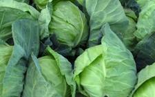 甘肃曝光9批次不合格食用农产品 多批次检出农残超标