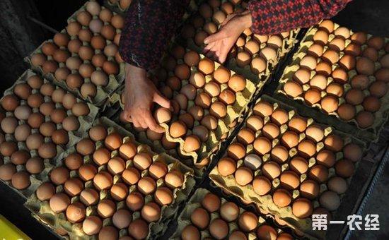 市场蛋价强势上涨  多个地区鸡蛋价格突破4元