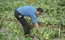 广西合浦县适时部署农产品质量安全监测工作