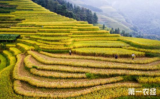 """两处传统农业系统""""入遗"""" 中国""""入遗""""农业系统增至13处"""