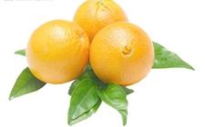 <b>秘鲁橙子57%出口英国 英是最主要出口对象</b>