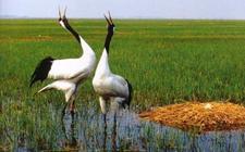 <b>丹顶鹤的生活习性是怎样的?丹顶鹤的生活习性介绍</b>
