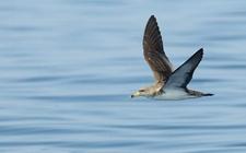 <b>海燕是鸟类吗?海燕的形态特征是怎样的?</b>