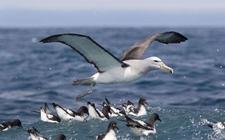 <b>海燕的繁殖方式是怎样的?海燕的繁殖方式介绍</b>
