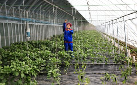 吉林省德惠市:创新实施四大工程 破解农民增收难题