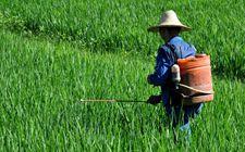 我国农药管理取得显著成效 农药使用量已连续3年实现负增长