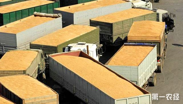 俄罗斯小麦出口需求强劲 年谷物出口量或创新纪录