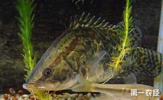 鱼塘杀虫用什么_鱼塘杀虫什么时候最好_鱼塘杀虫技术