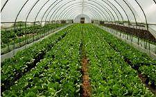 北京市启动全市农药减量使用行动