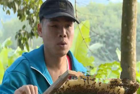 高胜章:勤劳养蜂唱响脱贫致富劳动赞歌