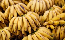 厄瓜多尔香蕉国际需求增加出口价格上涨