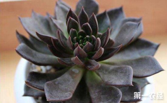 多肉植物怎么养?8种常见多肉植物的养护技巧介绍!