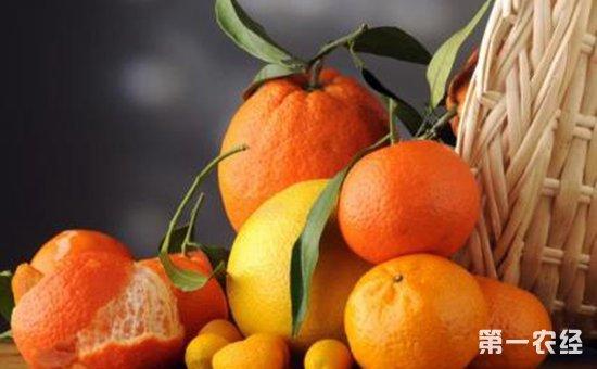 食安知识:吃橘子不吐籽有什么危害?