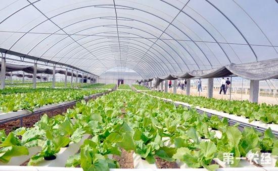 做农业哪种土地有用地优惠政策呢?你知道吗?